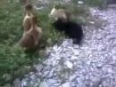 Профессиональный бой без правил котёнка с утёнком.