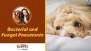 Бактериальная и грибковая пневмония / Bacterial and Fungal Pneumonia