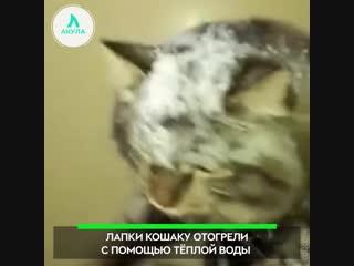Спасли кота | АКУЛА