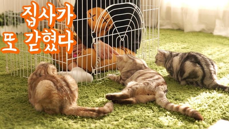 집사가 감옥에 갇혔을 때 고양이들 반응은