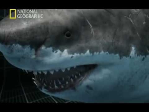 Depredadores Prehistóricos - 04 - Tiburones Monstruosos - National Geographic (2007)