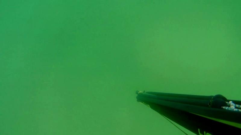 Подводная охота. г.Находка