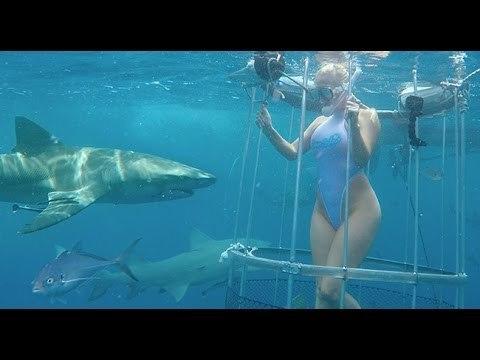 movie-shark-adult
