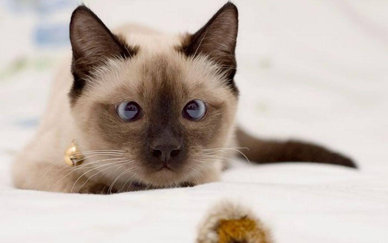 Зрительная память у кошек и кошачий компас