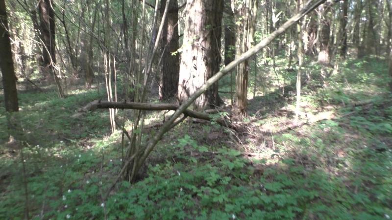 Сморгонь. Лес-8 (Дискордия). Главный (сев.- восточный) ход сообщения