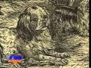 Породы собак Ши-тцу, Кавалер-кинг-чарлз-спаниель