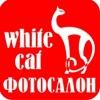 ***фотостудия***White cat***