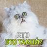 """Маленькие Большие НОВОСТИ on Instagram: """"Приготовьтесь увидеть котика, взгляд которого вселяет ужас. 😸Обязательно смотрите ролик до конца и пишите:..."""