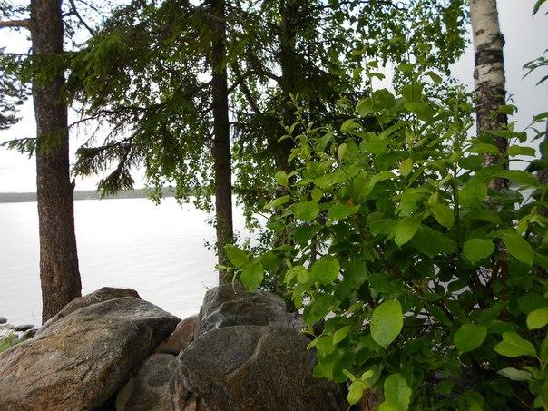 Озеро Контокки. Карелия.