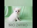 Pablo Patricio Brio Zaffiro SFL 71 male ds 21 33 03