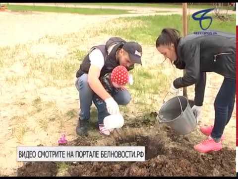 Экологическую акцию «Живём по-настоящему» провели во дворе домов 6 и 8 на улице Беловской