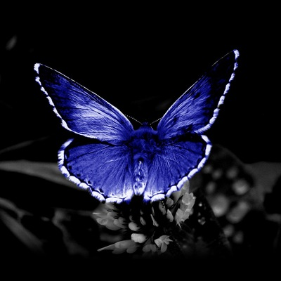 Тропические-Бабочки В-Магадане, 29 января 1959, Магадан, id186572403