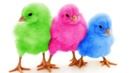 Aprende los Colores con Pollitos Bebés JUJU Jugando