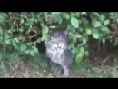 V-s.mobiСамые смешные видео про котов Супер приколы! Выпуск 4.mp4