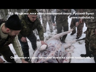 18+ Разделка лося на коллективной охоте. Русский булат. Отзывы о ножах.