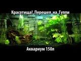 Мой аквариум (Красотища! Перезапуск на гуппи)