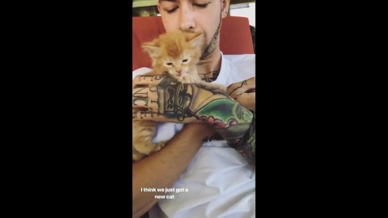 Трэвис гладит котёнка