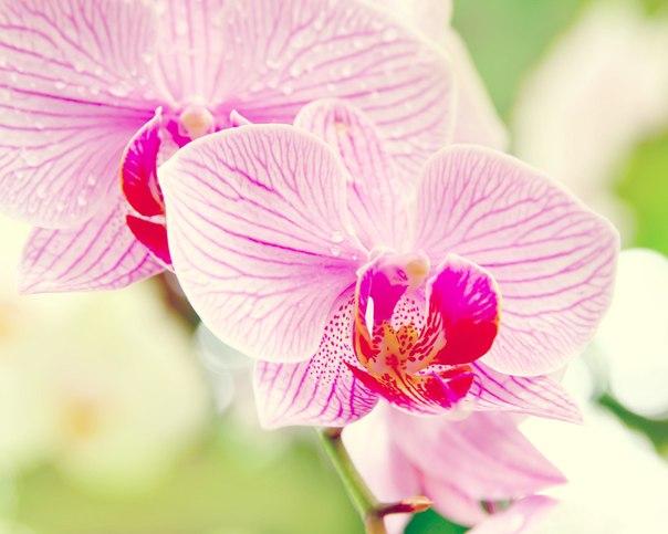 """таблица цветов. схема.  Автор схемы  """"Орхидеи """".  Ravensoul.  Размеры: 190 x 152 крестов."""