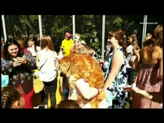 Выксавкурсе.рф: выставка кошек 2018