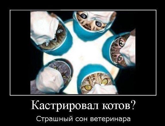 Кастрировал котов. Страшный сон ветеринаров
