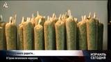 В Грузии легализовали марихуану