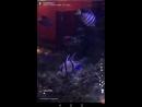 Рыбонька снимает своих собратьев D
