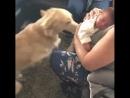 Встреча с новым членом семьи
