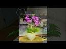 36 Mẫu Hoa Voan Đẹp Dễ Làm Tại Nhà Cho Các Mẹ, Các Chị !