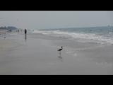 Штормит 09.02.17 пляж Бенолим Гоа Индия