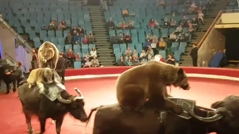 Цирковое шоу О чем мечтает Дед Мороз аттракцион Медведи на буйволах