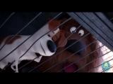 Смешные моменты из Тайная жизнь домашних животных __ The Secret Life of Pets