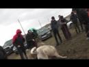 Агбар Тарзан Финал г. Оскемена 2018 г.в легком весе! 2 раунд