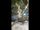 Monkey tries drinking from empty water bottle then throws it on the floor