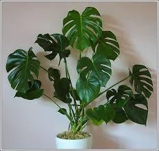 чернаямагия - Магия растений. Магические свойства растений. Обряды и ритуалы. Амулеты и талисманы из растений.  86kWed1ZG3o