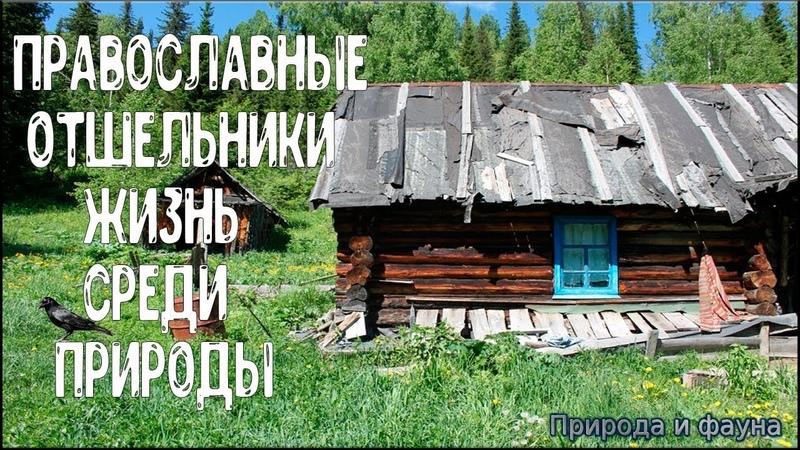 Православные Отшельники. Жизнь среди природы. Orthodox Hermits