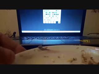 играю в манкрафт чаэс стройка