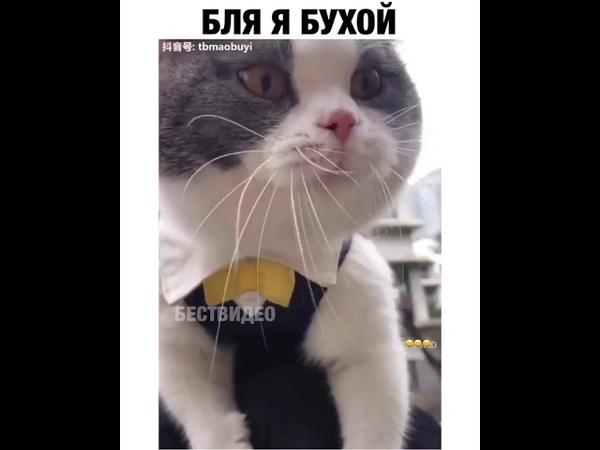 Кот Говорит Бля я бухой