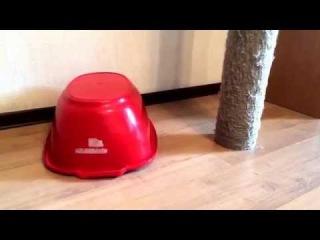 Кот Гоша прячется