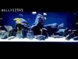 Подборка аквариумов с цихлидами Больших Озер со всего мира №1.