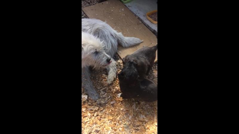 Собачьей семье нужна Передержка или дом!
