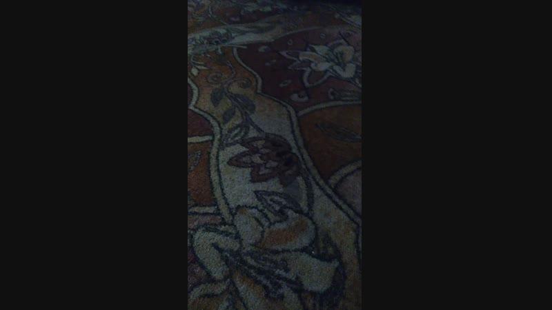 Пидарасы в моей хате