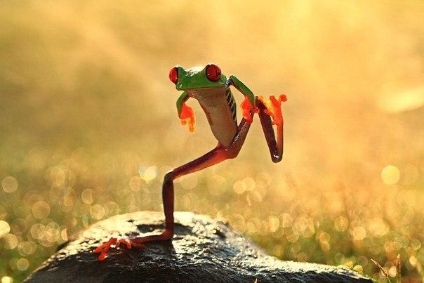 Танец лягушки….Танец?! Я погляжу как ты запляшешь на раскалённом камне.