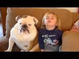Дети и собаки смотрят телевизор