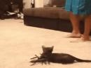 Кот и паук