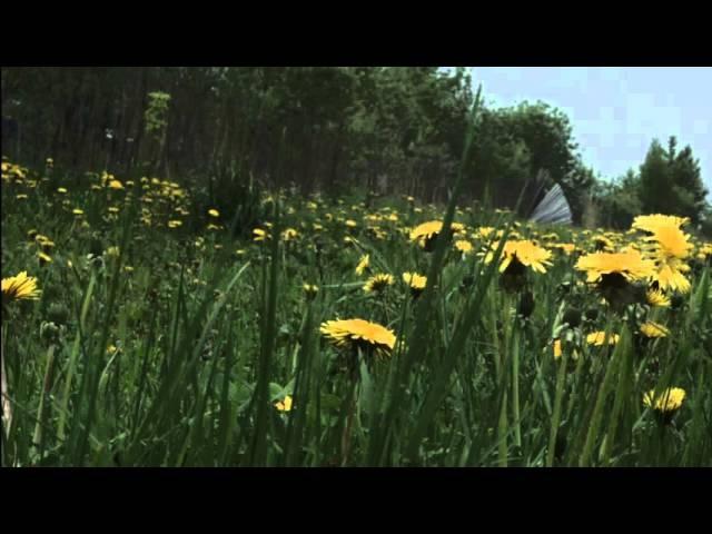 смотрит лес зелеными глазами(пой ей песни)Музыка Олега Сапегина,слова Алла Колмакова