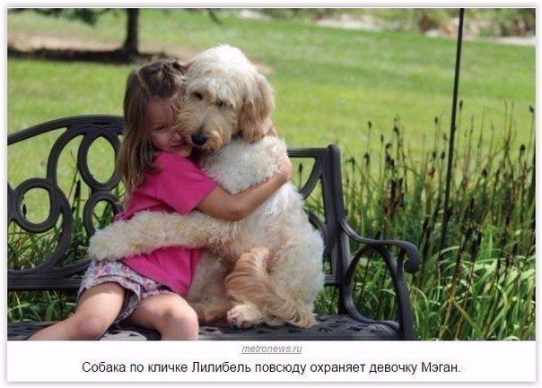 Кто-то ещё сомневается, что собака лучший друг человека
