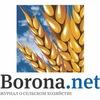 Borona.net