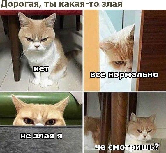 Фото №456256301 со страницы Люси Бушуевой