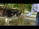 Ослик Рада родилась в симферопольском зоопарке