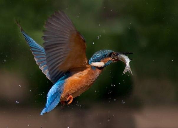 прикольные фото про рыбалку и охоту